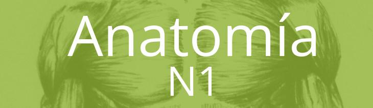 Anatomía N1